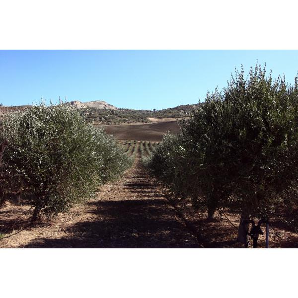Ottobre: è tempo di olive e...