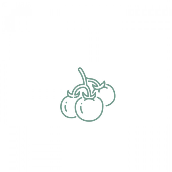 ADOPT A TOMATO PLANT